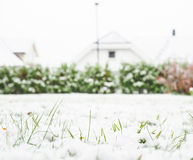 Fresh snow cover over green grass Stock Images