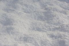 SPARKLING FRESH SNOW BACKGROUND. Fresh snow covering all but a few blades of grass poking through Stock Photos