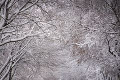 Fresh snow fall on trees. Stunning composition. Room for text stock images