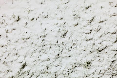 Fresh snow on green grass closeup background Stock Photos