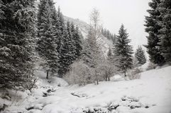 Free Fresh Snow In The Mountain Forest. Stock Photos - 140013443