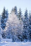 Fresh snow in the mountains Stock Photo