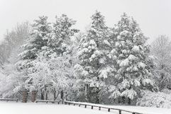 Fresh Snow at the Park. Fresh snow on the trees at the park stock photo