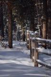 Parkland , Jasper National park. Fresh snow in the parkland Royalty Free Stock Photo