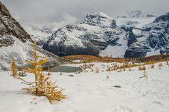 Fresh snow in September in Larch valley, Banff np. Famous hiking trail in canadian rockies, autumn season photography royalty free stock image