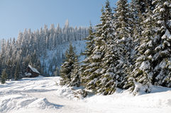 Fresh snow at Snoqualmie summit Stock Photos