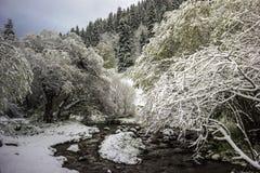 Fresh snow. Royalty Free Stock Photos
