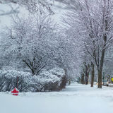 Fresh Snow Street Corner and trees, early morning Royalty Free Stock Photo