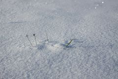 Fresh snow surface in sunny winter day. Fresh snow in sunny winter day Royalty Free Stock Image