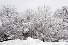 Fresh snow on trees Royalty Free Stock Photo