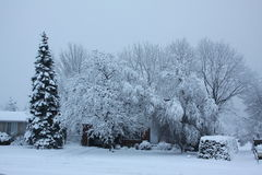 Fresh Snow on Trees Stock Photography