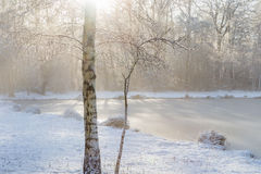 Fresh snow on the twigs of a birch, melting away quickly in stro Stock Images