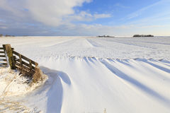 Fresh snow in winter in a field Royalty Free Stock Photos