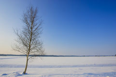 Fresh snow in winter in a plain field stock images