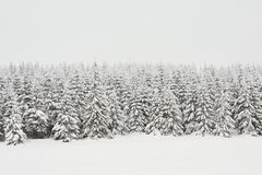 Fresh snow Royalty Free Stock Image