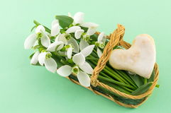 Fresh snowdrops in a basket Royalty Free Stock Image