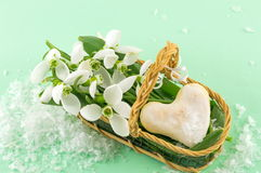 Fresh snowdrops in a basket Royalty Free Stock Photos