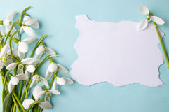 Fresh snowdrops on blue background with copyspace Stock Image