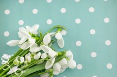 Fresh snowdrops on blue dotted background Royalty Free Stock Images