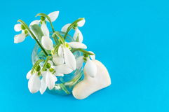 Fresh snowdrops bouquet on blue background Royalty Free Stock Photo
