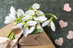 Fresh snowdrops and a present box Royalty Free Stock Photos
