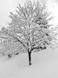 Fresh Snowfall Landscape Royalty Free Stock Images