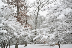 Fresh snowfall in midwest park. Stock Images