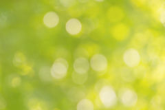 Fresh soft green colour bokeh bush tree and sunlight Royalty Free Stock Photo