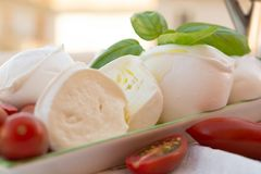 Fresh soft Italian white cheese mozzarella buffalo, original fro. M Campania, Paestrum and Foggia regions, South Italy, served with tomatoes and fresh basil royalty free stock images