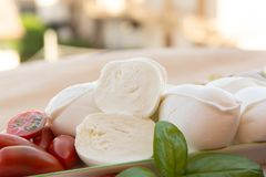 Fresh soft Italian white cheese mozzarella buffalo, original fro. M Campania, Paestrum and Foggia regions, South Italy, served with tomatoes and fresh basil royalty free stock image