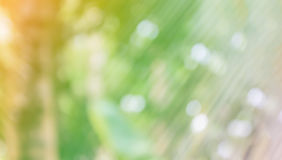 Fresh soft nature green colour bokeh coconut bush tree and sunlight for abstract nature background stock images