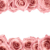 Fresh soft pink rose frame on white background. Wedding background.  Stock Photo