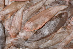 Fresh Sole fish Stock Photos