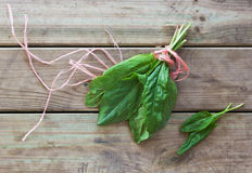 Fresh sorrel. Bunch fresh sorrel tied with a rope Stock Image