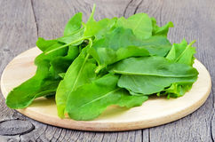 Fresh sorrel. Sorrel on the cutting board on a wooden table Royalty Free Stock Images