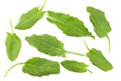 Fresh sorrel, garden sorrel, rumex acetosa, green leaves, isolated on white background. Top view Royalty Free Stock Image