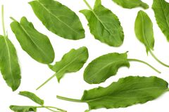 Fresh sorrel, garden sorrel, rumex acetosa, green leaves, isolated on white background. Top view Stock Photography