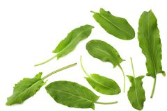 Fresh sorrel, garden sorrel, rumex acetosa, green leaves, isolated on white background. Top view Stock Image