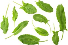 Fresh sorrel, garden sorrel, rumex acetosa, green leaves, isolated on white background. Top view Stock Photo