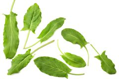 Fresh sorrel, garden sorrel, rumex acetosa, green leaves, isolated on white background. Top view Stock Images