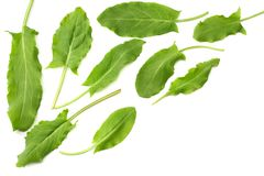 Fresh sorrel, garden sorrel, rumex acetosa, green leaves, isolated on white background. Top view Royalty Free Stock Photography