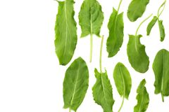 Fresh sorrel, garden sorrel, rumex acetosa, green leaves, isolated on white background. Top view Stock Photos