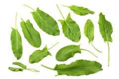 Fresh sorrel, garden sorrel, rumex acetosa, green leaves, isolated on white background. Top view Royalty Free Stock Photo
