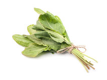 Fresh sorrel isolated Royalty Free Stock Image