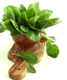 Fresh sorrel isolated on white background. In the wooden bowl Royalty Free Stock Image
