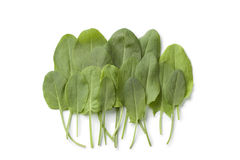 Fresh sorrel leaves Royalty Free Stock Image