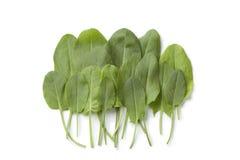 Fresh sorrel leaves. On white background Royalty Free Stock Image