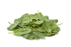 Fresh sorrel leaves Stock Photos