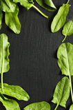 Fresh sorrel leaves on black background. Stock Photo