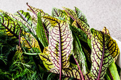 Fresh Sorrel Leaves closeup view. Organic product Stock Photography
